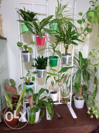Plants with Stand