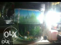FISH tang sale big size good condishion