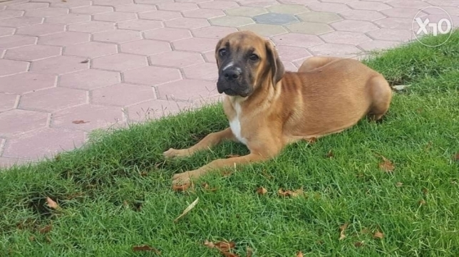 Cancarso - female - 4 months