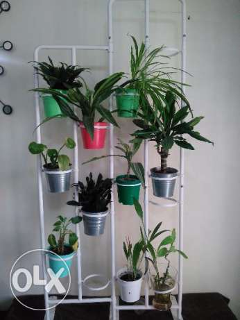 Live plants 10 with stand