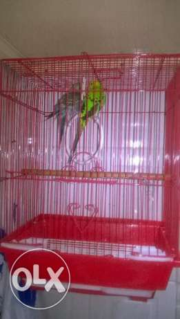 Bird have cage