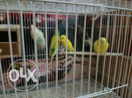 6 birds for sale