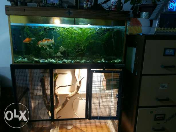 Fish aquarium &birds nest ,with fishes (big ones) birds nest 1m×46cm