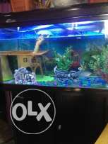Aquariums for sale good condition with external filter