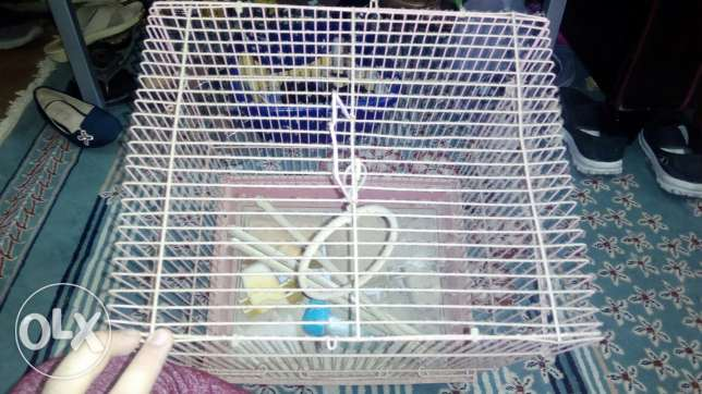 Very good parrot cage