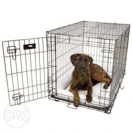 large cage for large dogs