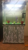 Fish tank with all decors