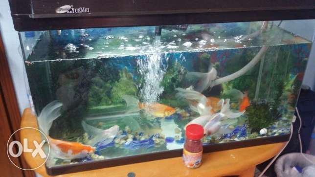 Fishes tank with fishes