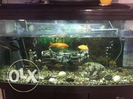BIG 3D glass view aquarium sale