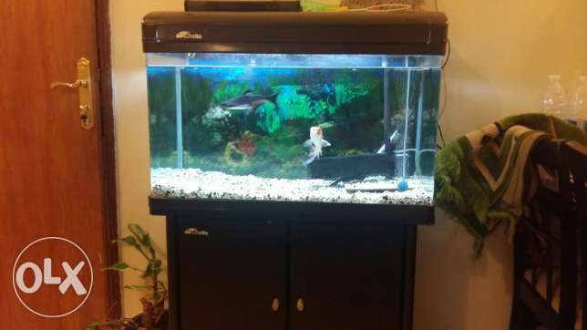 fish aqurium for sale with 3 fishes 2 filters